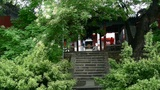 Temple in lush forest,Burning incense in Incense burner,Wind of smoke Footage