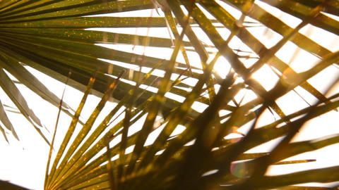 palm leaves in the sun Stock Video Footage