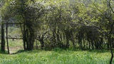 fence gate shrub wall,Lush weeds in wind,grassland Footage
