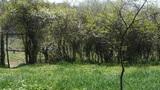 Lush weeds in wind,grassland,fence,gate,door,wall Footage