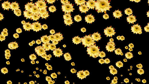 cactus flowers emissions Stock Video Footage