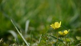 Beautiful wild flowers in grass Footage