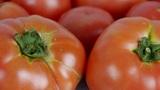 A set of fresh tomato fruit Footage