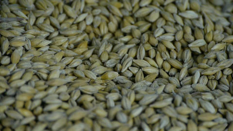 Many wheat & cereal seeds Stock Video Footage