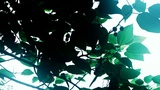 The dense branches foliage covered sky,sunlight through leaves Animation