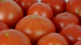 A set of fresh tomato fruit Footage
