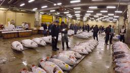 Famous Tuna auction at Tsukiji fish market - Tokyo, Japan Footage