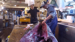 Tokyo, Japan - Fresh Tuna main cut by professional Japanese tuna handlers at Tsu Footage