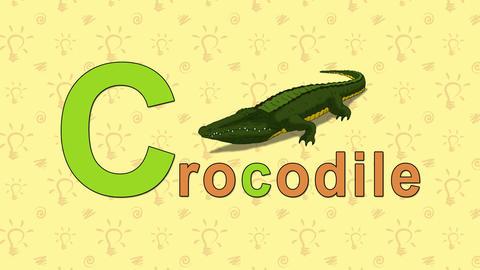 Crocodile. English ZOO Alphabet - letter C Live Action
