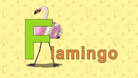 Flamingo. English ZOO Alphabet - letter F Live Action