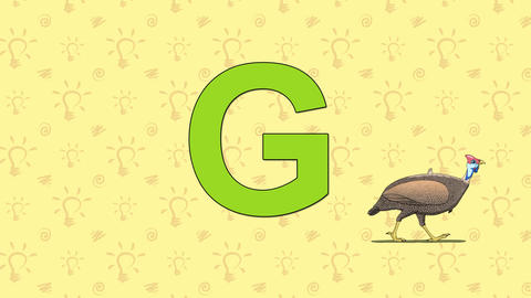 Guineafowl. English ZOO Alphabet - letter G Footage