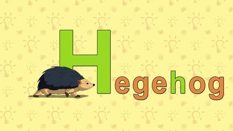 Hedgehog. English ZOO Alphabet - letter H Footage