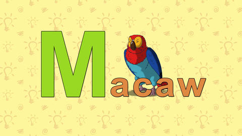 Macaw. English ZOO Alphabet - letter M Footage