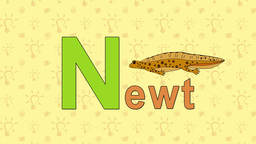 Newt. English ZOO Alphabet - letter N Footage