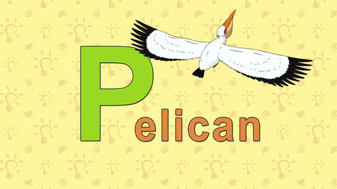 Pelican. English ZOO Alphabet - letter P Footage
