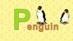 Penguin. English ZOO Alphabet - letter P Footage