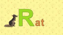 Rat. English ZOO Alphabet - letter R Footage