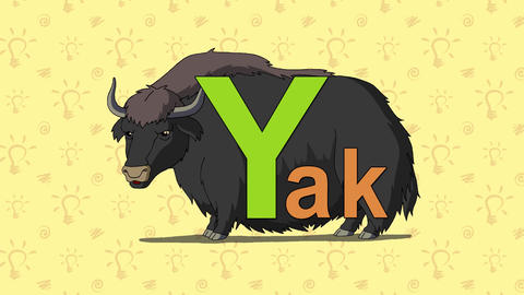 Yak. English ZOO Alphabet - letter Y Footage