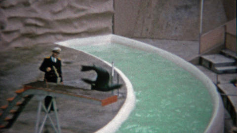 1962: Seal aquatic show diving off for crowds enjoyment Footage