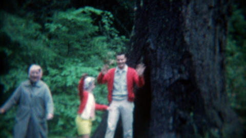 1969: People coming out of the hollowed inside of large tree Footage