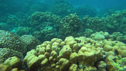 Corals and fish in the Andaman Sea, Thailand Footage