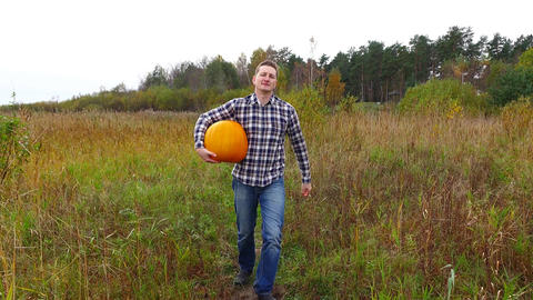 Young adult grower toddle with heavy ripe pumpkin at rural field, dolly shot Footage