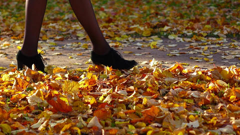 Elegant woman legs slowly go at autumn park path, touch yellow leaves Footage