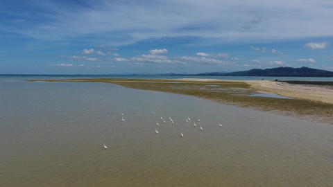 Flying over flock of herons on sea shallow Footage