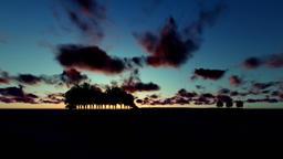 Guitar Trees over Ocean, Timelapse Sunrise with birds flying Animation