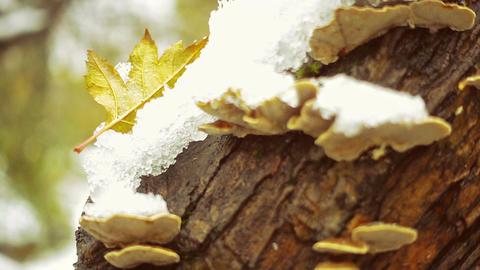 Polypore Mushrooms On A Tree Footage