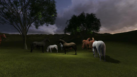 scene of night p asture. Herd of horses grazing in a... Stock Video Footage