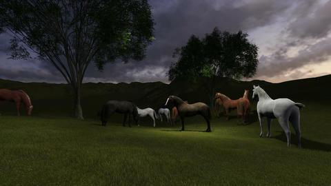 scene of night p asture. Herd of horses grazing in a pasture in the night light Animation