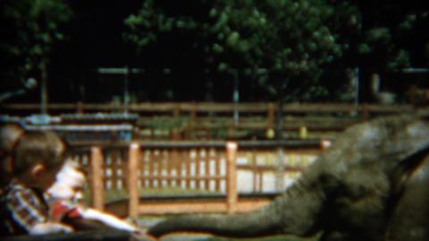 1955: Young boys feeding baby elephant peanuts at city zoo Footage