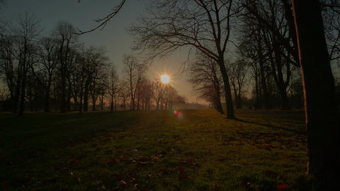 Jib shot of wintry park landscape with a sun flare and star burst Live Action