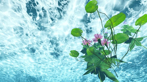 flowers under water in lake water Stock Video Footage