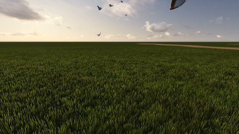 green field with butterfly and cloudy sky Animation
