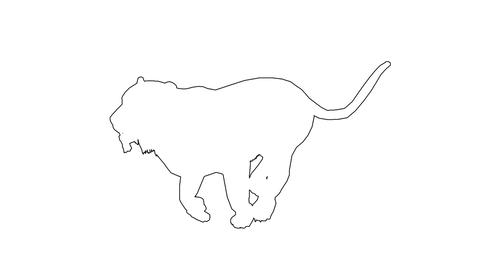 Panther moving. On white screen Animation