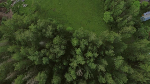 Aerial view of green woods and village houses, Russia Footage
