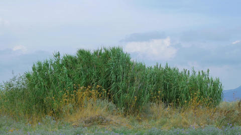 Outdoor scene with reeds Footage