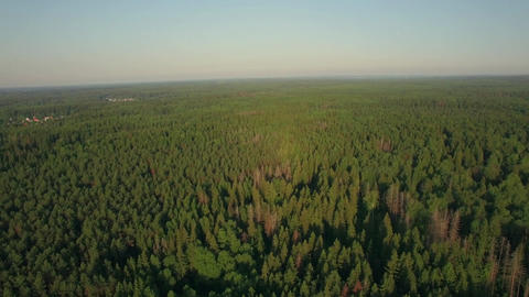 Aerial flight above the huge green forest, Russia Footage