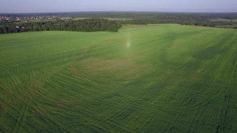 Aerial flight above the agricultural field with green grass, Russia Footage