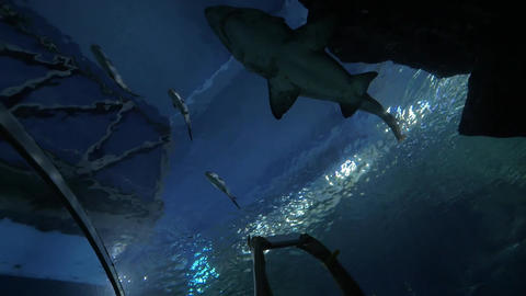 Woman with touch pad shooting shark in oceanarium Footage