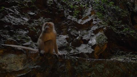 Monkey in Batu Caves, Malaysia Footage