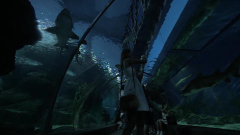 In Siam Ocean World people stand at the aquarium and watching for big fish, phot Footage
