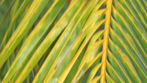Mynah bird on palm branch Footage