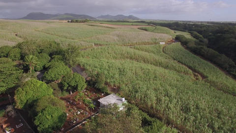 Aerial shot of sugarcane fields in Mauritius Footage