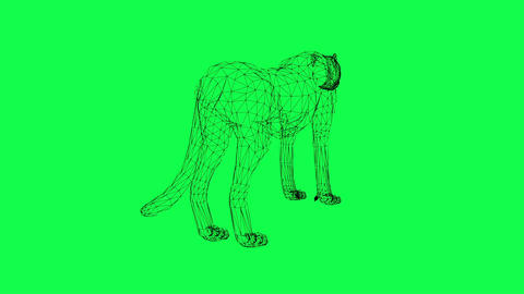 rotation of wire frame isolated Leopard Animation