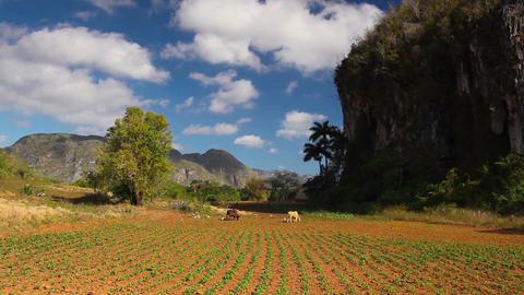 Valley de Vinales, Pinar del Rio, Cuba Footage