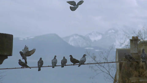 City birds flying and sitting on electricity wire, snowy mountain background Footage