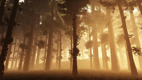 Mysterious Fairy Tale Deep Forest 1 Animation
